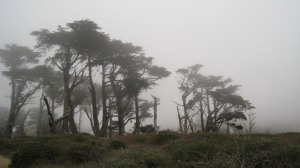 Tomales Point Fog